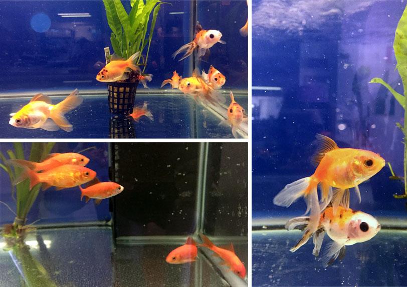 collage-pesci