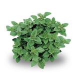 piante_aromatiche
