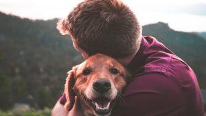 cane-felice-con-un-ragazzo-800x450