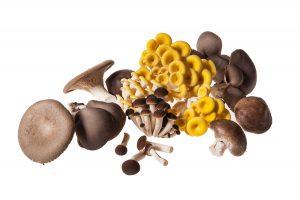 mushrooms_bg